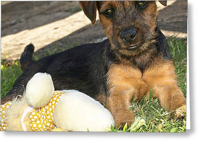 Playmates - Puppy With Toy Greeting Card