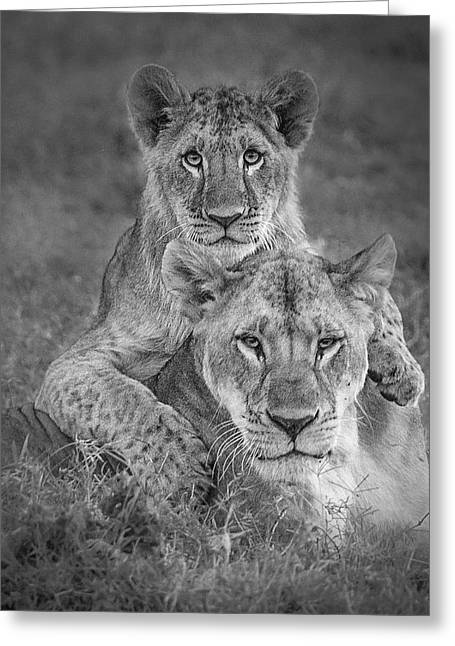 Playtime With Mama! Greeting Card