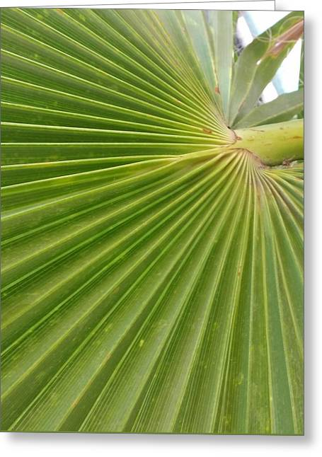 Pleated In Greenish  Greeting Card by ARTography by Pamela Smale Williams