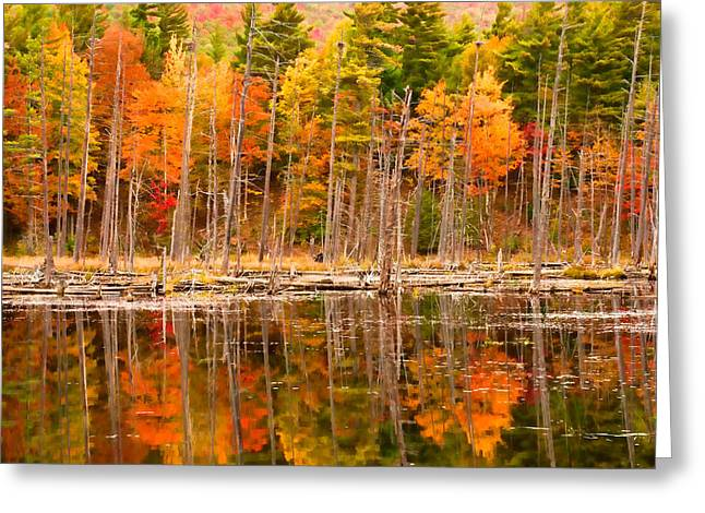 Plethora Of Fall Colors Greeting Card