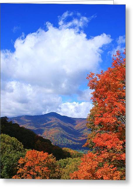 Plott Balsam Mountains Foliage Greeting Card