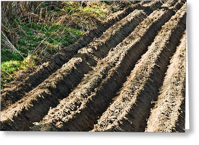 Ploughed Field Greeting Card by Jane McIlroy