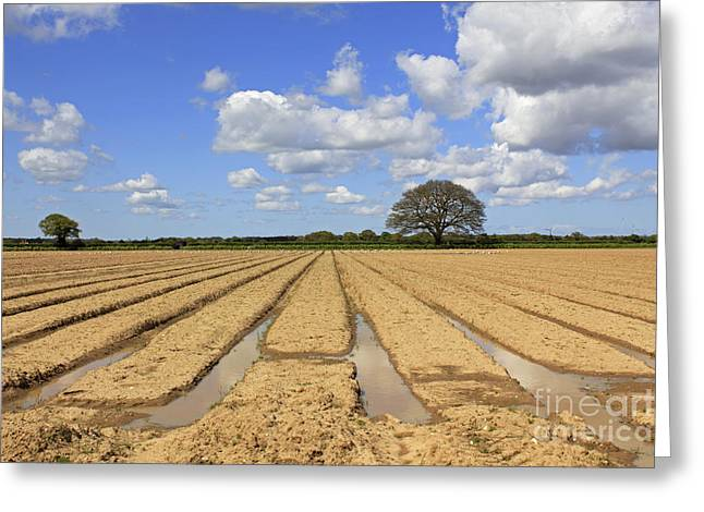 Ploughed Field Greeting Card