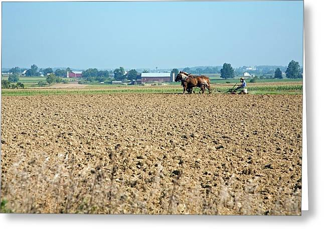 Ploughing On An Amish Farm Greeting Card