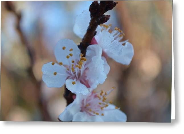 Plum Blossom 1.5 Greeting Card
