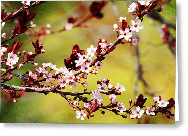 Greeting Card featuring the photograph Plum Blossoms by Trina  Ansel