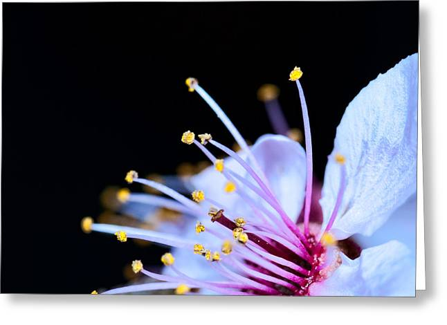 Greeting Card featuring the photograph Plum Tree Blossom V by Robert Culver