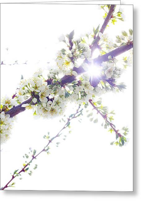Plum Tree From Heaven Greeting Card by Alex Wrenn