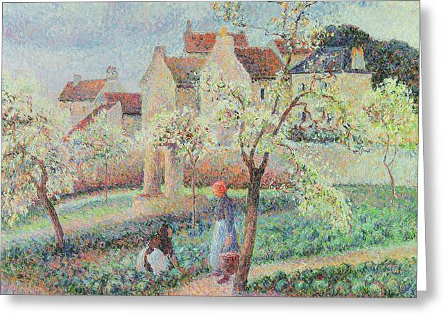 Plum Trees In Flower Greeting Card by Camille Pissarro