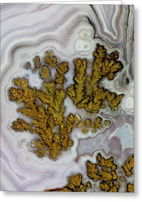 Plume Agate, Quartzsite, Az Greeting Card by Darrell Gulin