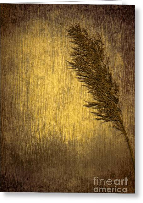 Plume Greeting Card by Jan Bickerton