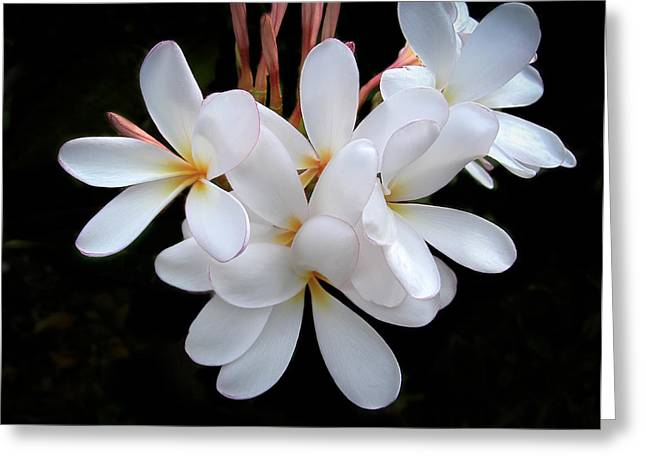 Plumeria Greeting Card by Penny Lisowski