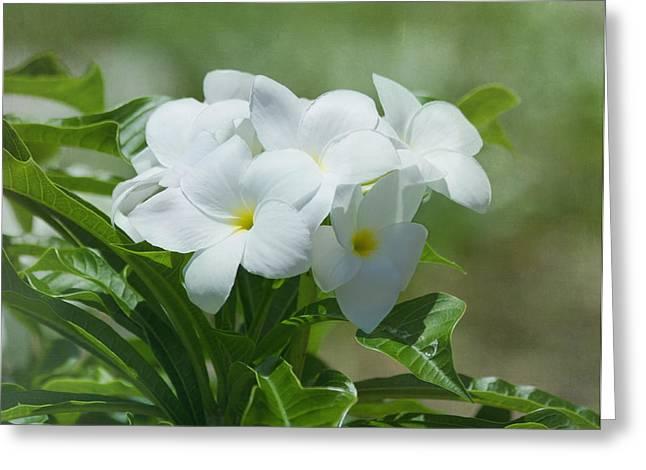 Plumeria - Tropical Flowers Greeting Card by Kim Hojnacki