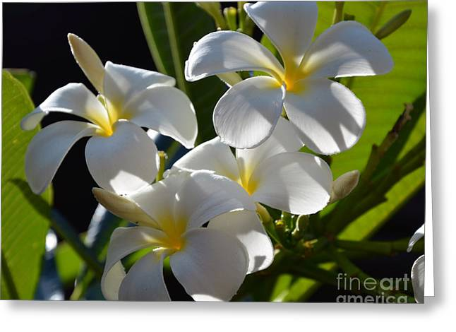 Greeting Card featuring the photograph Plumeria's IIi by Robert Meanor