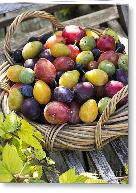 Plums In A Basket Greeting Card by Tim Gainey