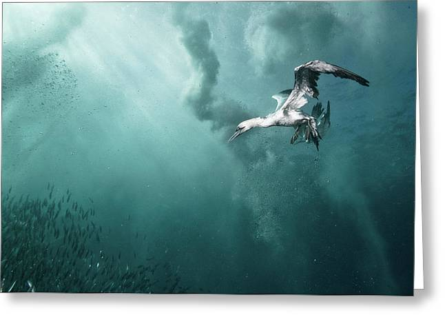 Plunge Diver Greeting Card