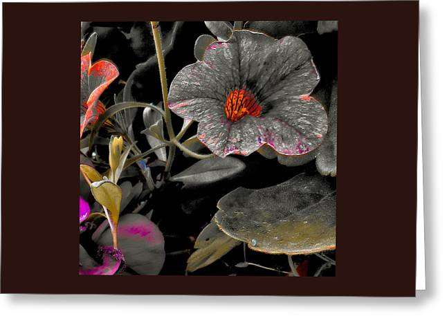 Greeting Card featuring the photograph Pocket Of Orange by Thom Zehrfeld