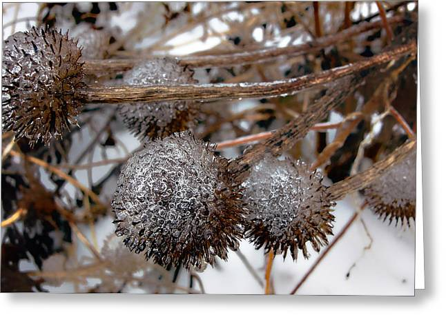 Pods In Ice Greeting Card by Ellen Tully