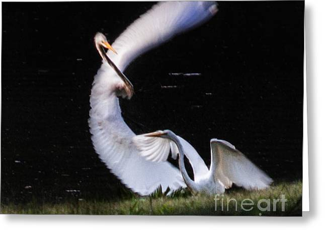 Poetry In Motion 1 Greeting Card by Jinx Farmer