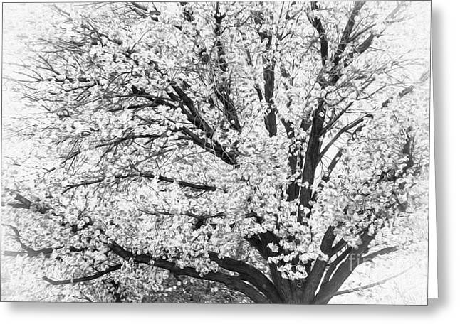 Greeting Card featuring the photograph Poetry Tree by Roselynne Broussard