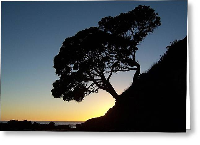 Pohutukawa Trees At Sunrise Greeting Card by Peter Mooyman