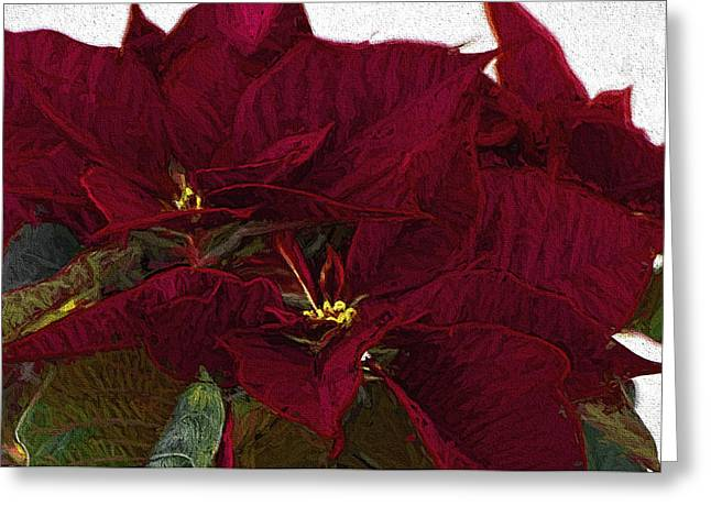 Poinsettia 3 Digital Painting On Canvas 2 Greeting Card by Sharon Talson