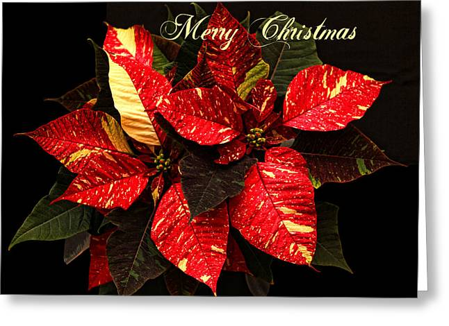 Poinsettia Christmas Greeting Card