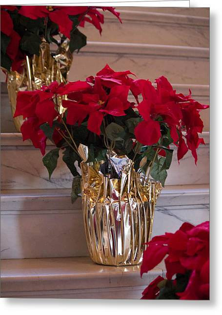 Poinsettias Greeting Card by Patricia Babbitt