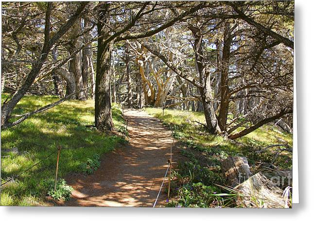 Point Lobos Cypress Path Greeting Card by Jack Schultz