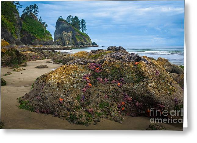 Point Of The Arches Beach Greeting Card by Inge Johnsson