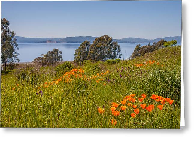 Point Pinole Poppies Greeting Card by Marc Crumpler