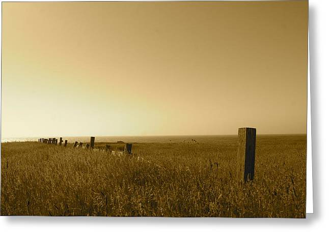 Point Reyes Field Greeting Card by Colleen Renshaw