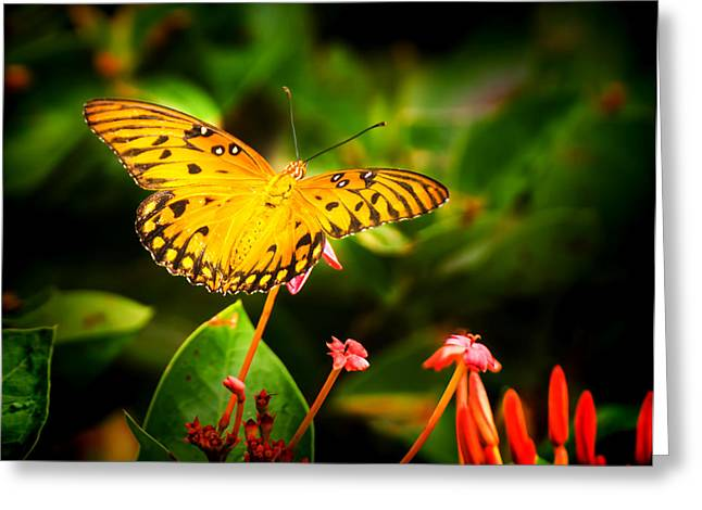 Poised For Flight Greeting Card by Mark Andrew Thomas