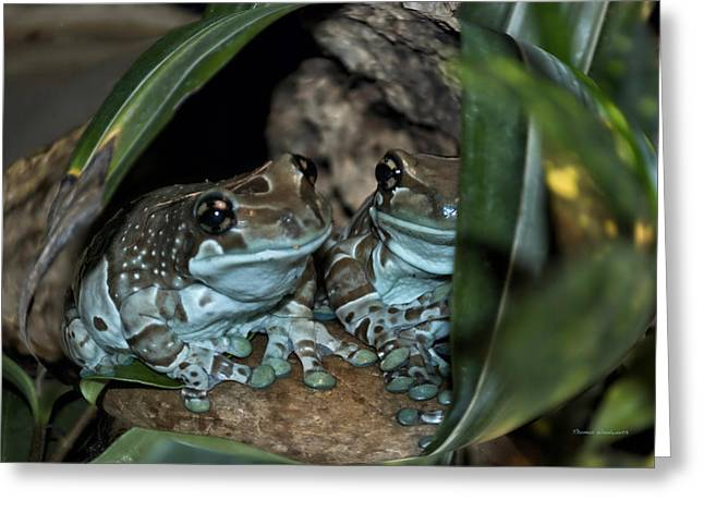 Poisonous Frogs With Sticky Feet Greeting Card by Thomas Woolworth