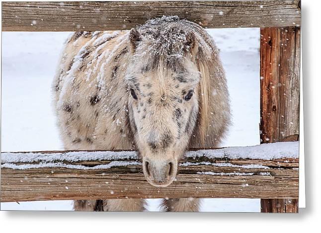 Poke A Dot Pony Greeting Card by Gigi Embrechts