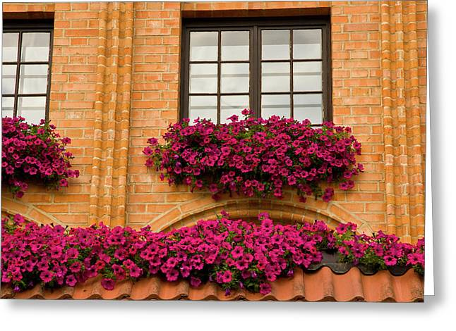 Poland, Gdansk Window Boxes With Purple Greeting Card