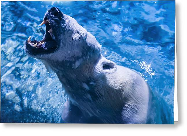 Polar Bear Greeting Card by Chris Flees