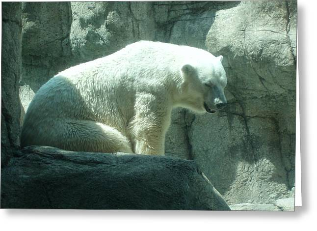 Polar Bear Greeting Card by Fortunate Findings Shirley Dickerson