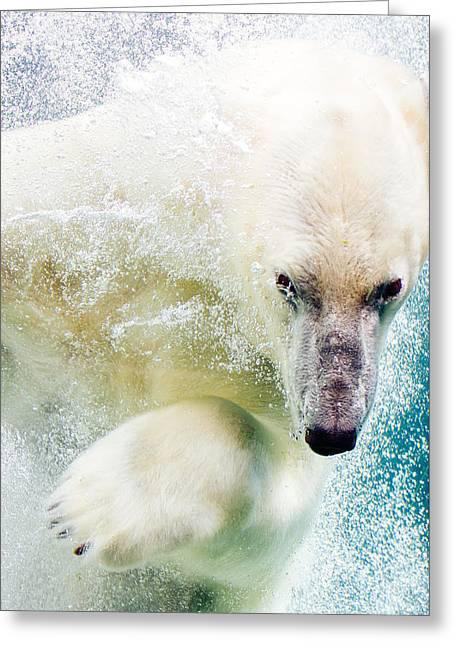 Polar Bear In Water Greeting Card