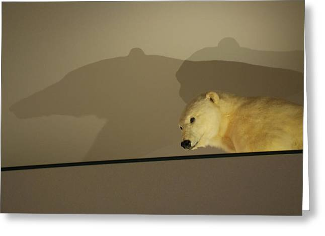 Polar Bear Shadows Greeting Card