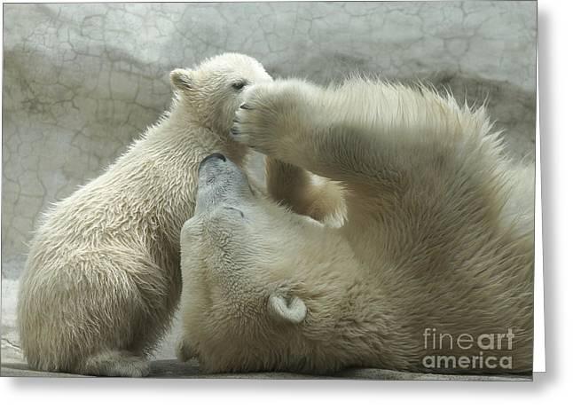 Polar Bears 4 Greeting Card