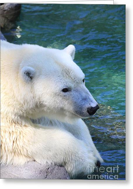 Polar Pal Greeting Card