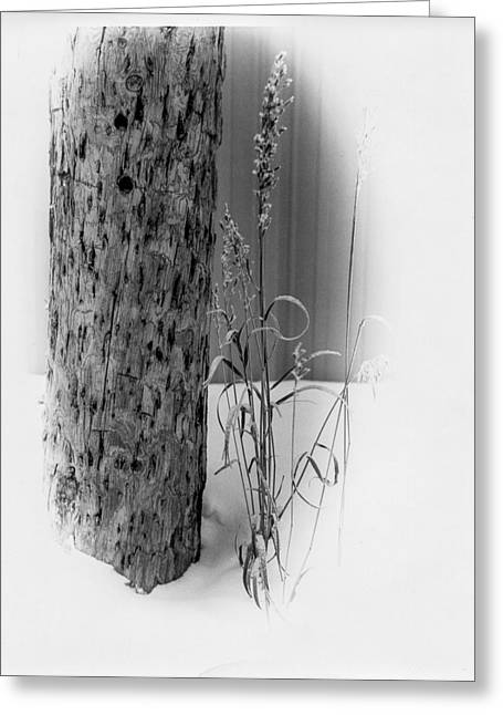 Pole And Grass Vignette Greeting Card