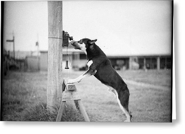 Police Dog On Phone Greeting Card