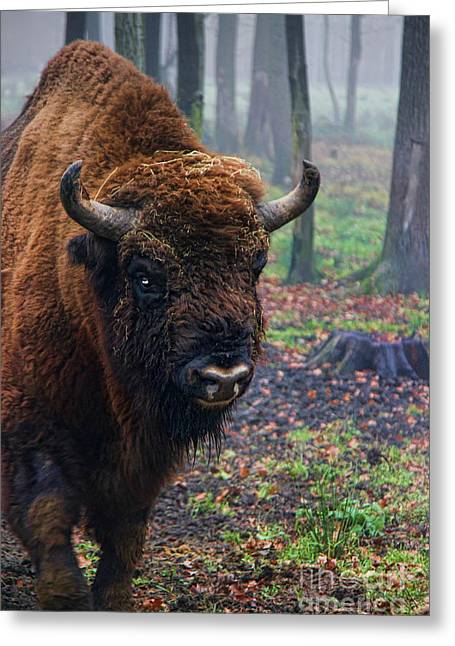 Polish Bison Greeting Card by Mariola Bitner