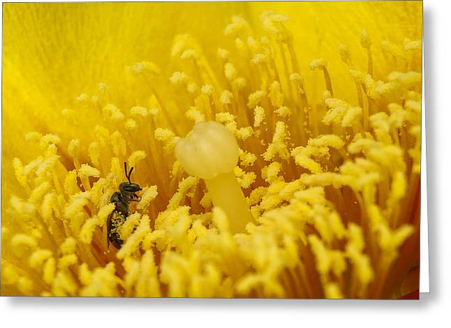 Pollen Forest Greeting Card