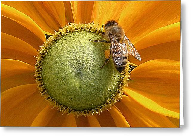Pollen Time Greeting Card by Brian Chase