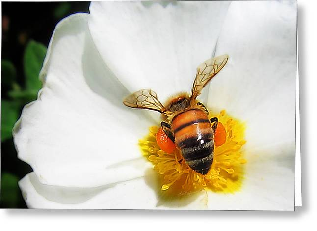 Pollinating Greeting Card