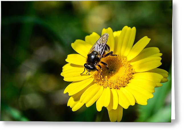 Pollination Agent Greeting Card