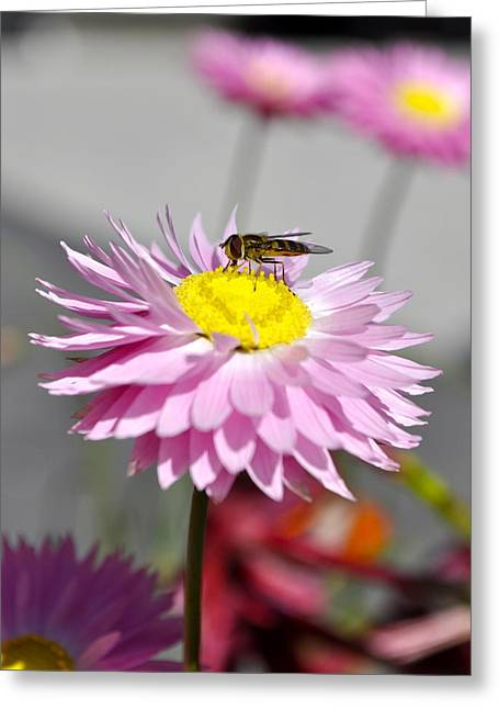 Greeting Card featuring the photograph Pollination by Cathy Mahnke